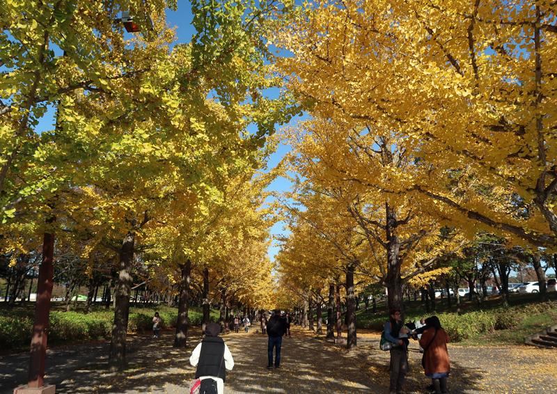 あづま総合運動公園のイチョウ並木