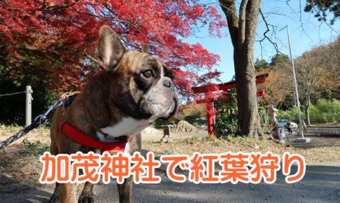 加茂神社で紅葉狩り