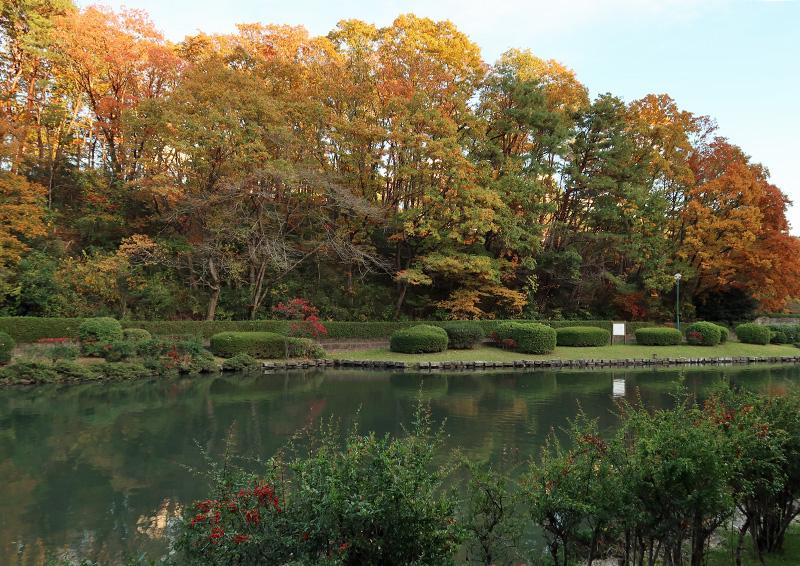 台原森林公園の紅葉