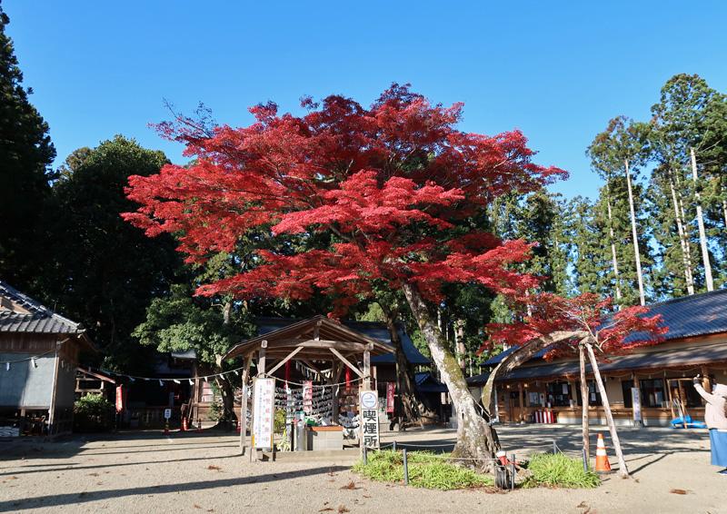 加茂神社の紅葉
