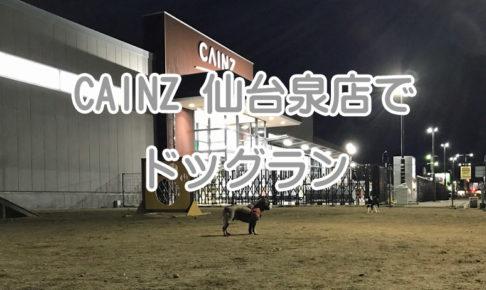 カインズ 仙台泉店 ドッグラン