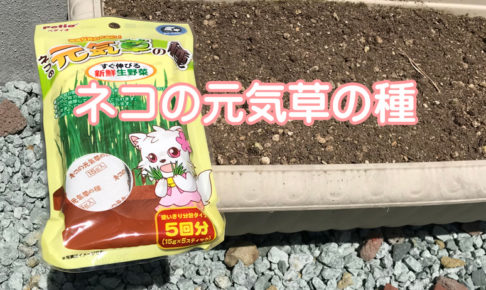 ネコの元気草の種