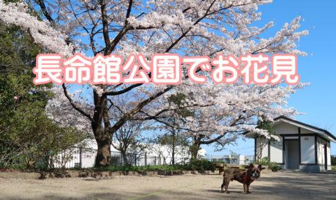 長命舘公園の桜