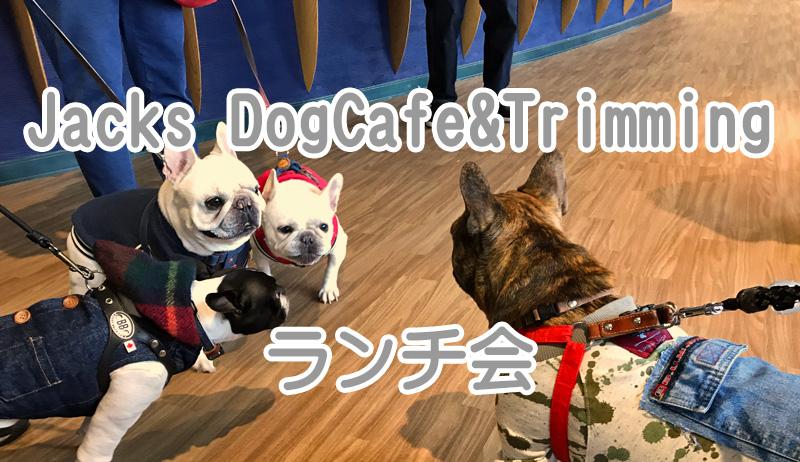 Jacks DogCafe&Trimming (ジャックス) 錦ケ丘ヒルサイドモール