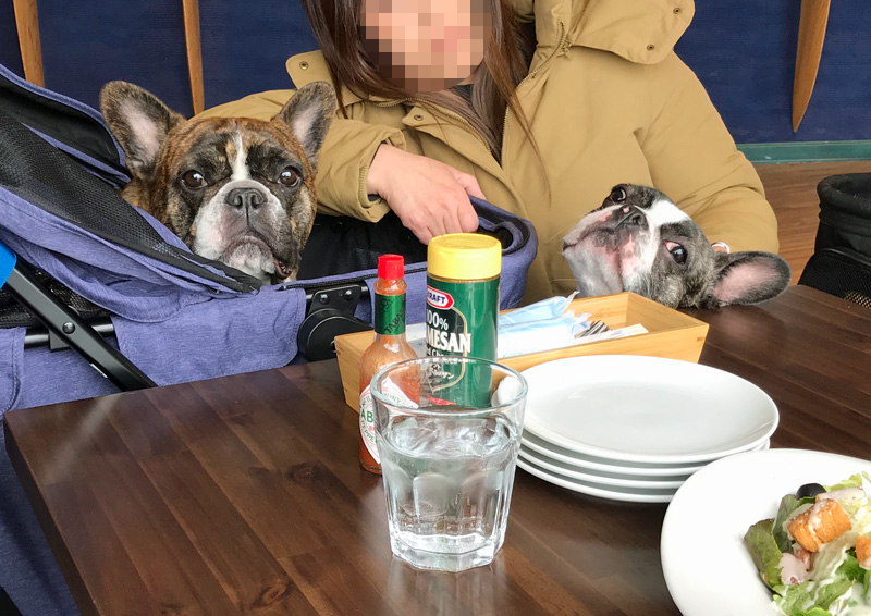 Jacks DogCafe&Trimming
