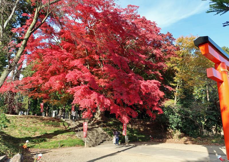 賀茂神社で紅葉狩り