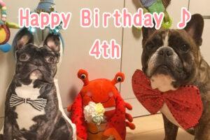 フレンチブルドッグ とらじろう 4歳の誕生日