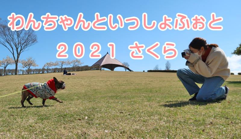 わんちゃんといっしょふぉと 2021 さくら