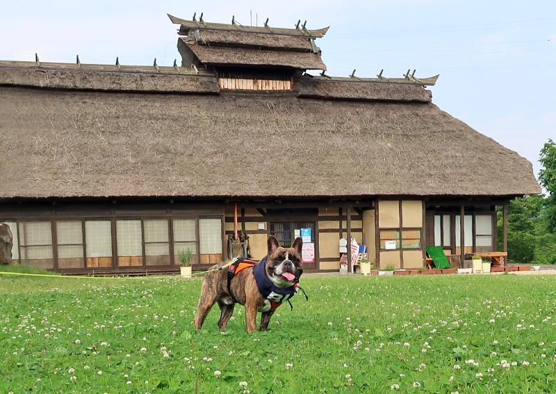 三春の里 田園生活館 ドッグラン