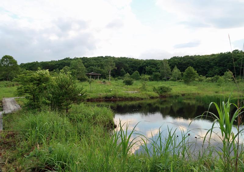エンゼルフォレスト那須白河 湿地帯