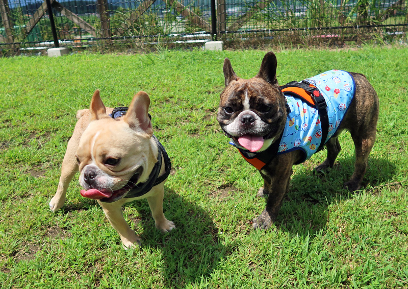 Jacks DogCafe&Trimming (ジャックス) ドッグラン